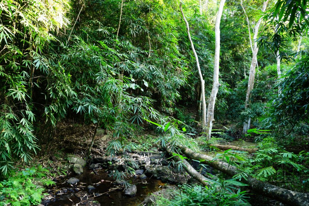 Wet-Tropics_Moisture-Management-1024x683